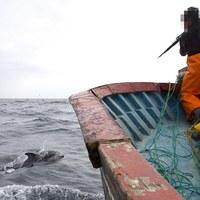 Delfineket cápacsalinak használni: