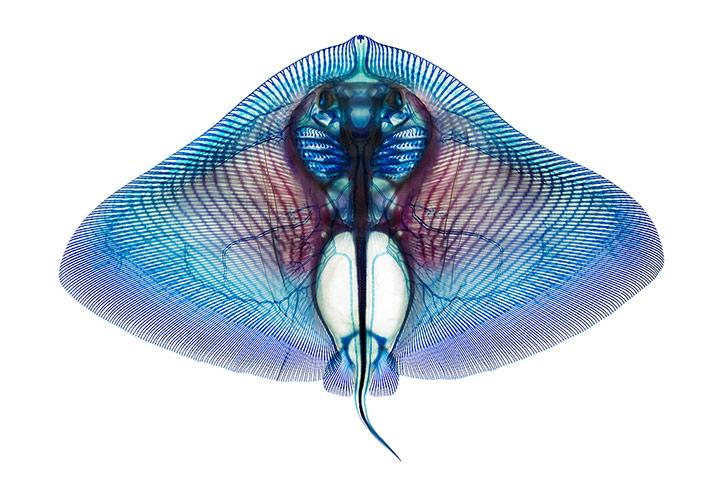 Butterfly-Ray-007.jpg