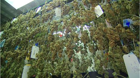 _73494880_marijuana.png