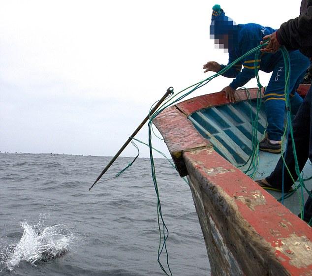 delfin6.jpg