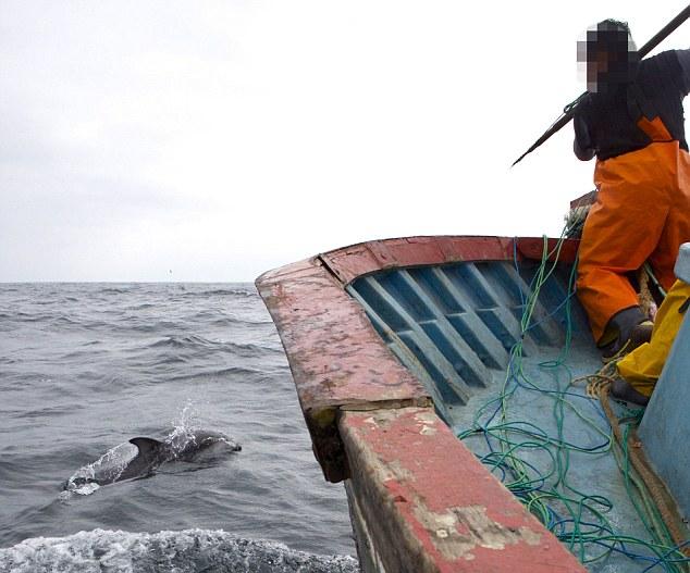 delfin7.jpg
