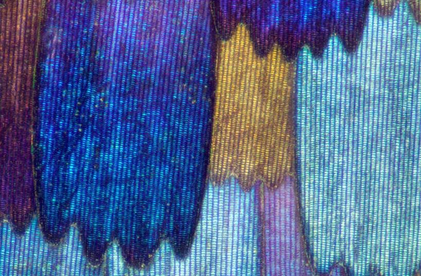 macro-butterfly-wings01.jpg