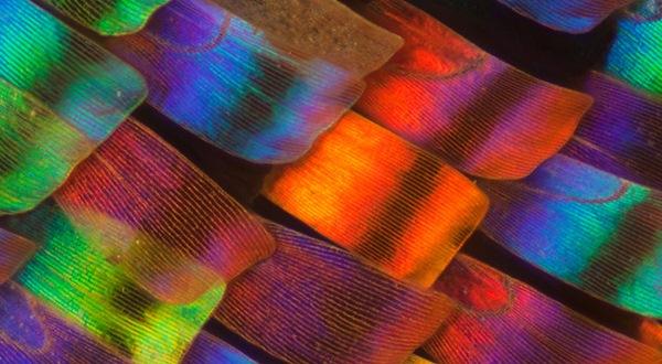 macro-butterfly-wingstop.jpg