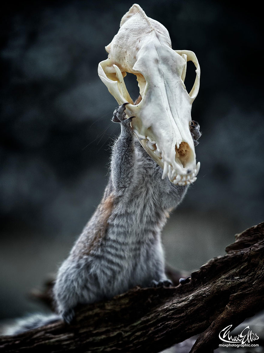 wildlife-photography-squirrels-max-ellis-1__880.jpg