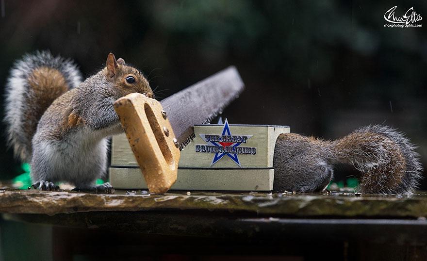 wildlife-photography-squirrels-max-ellis-9__880.jpg