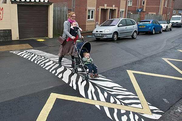 Igazi zebracsíkos zebra.