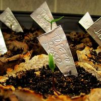 Jelöld meg a növényeket