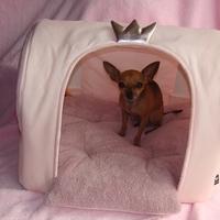 Termékbemutató - Gyönyörű koronás rózsaszín kutyaház