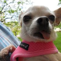 Bizsu selfie