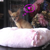 Termékbemutató - Macis pihe-puha rózsaszín kutyafekhely