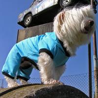 Termékbemutató - Szegecses kutyaoverall