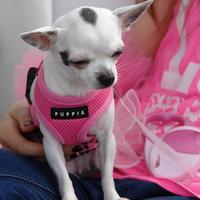 Puppia - Soft kutyahám rózsaszín