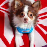 Puppia - Dotty kutyahám