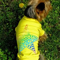Termékbemutató - Tengericsillagos kutyapóló