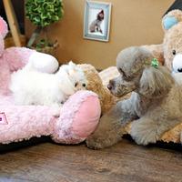 ParisDog - Bear pet kutyafekhely