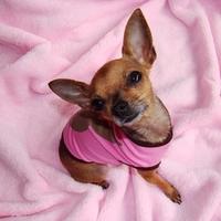 Termékbemutató - Playboy rózsaszín póló