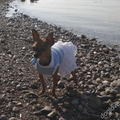 Termékbemutató - Fodros kék kutyaruci