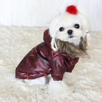 Termékbemutató - Csillagos kutyakabátok