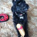 Ruffio y Jukiette szívar kutyajáték