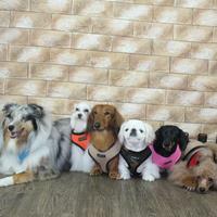 Puppia Soft kutyahám