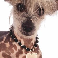 Termékbemutató - Szívecskés nyaklánc kanoknak