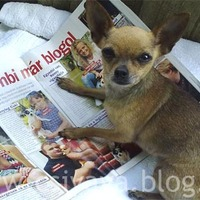 Bambi már blogol