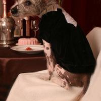 Termékbemutató - Gentleman kutyapulóver