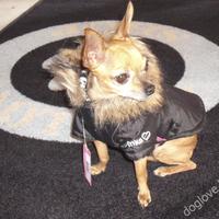 Termékbemutató - Fekete koponyás kutyakabát