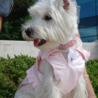 Termékbemutató - Fodros rózsaszín kutyamellény