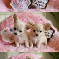 Termékbemutató - Szülinapi torta kutyajáték kanoknak
