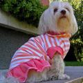 Termékbemutató - Cukorka színű kutyaruha