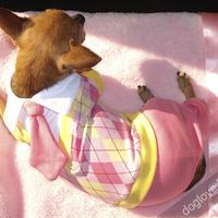 Termékbemutató - Rózsaszín-sárga nyakkendős kutyaoverall