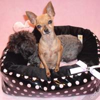 Termékbemutató - Rózsaszín pöttyös fekete lakk kutyafekhely