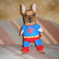 Athoska a szuperkutya :)