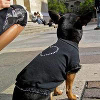 Termékbemutató - Swarovski kristályos kutyapóló
