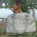 Termékbemutató - Ezüst diszítésű luxus bőr kutyahordozó