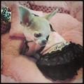 Dobaz - Pretty girl kutyaruha