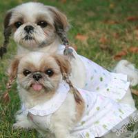Termékbemutató - Fodros pasztelszínű virágos kutyaruha