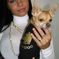 Termékbemutató - Vicces kutyapóló