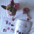 Termékbemutató - Masnis rózsaszín kutyatop