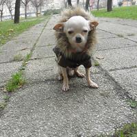 Elvis Puppia kabátban
