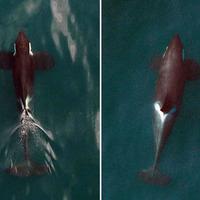 Drónok és gyilkos bálnák
