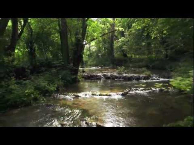 DrónVideó: erdő