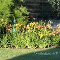105 Virágok, gyümölcsök, műhelyasztal :)