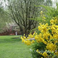 97 Gyönyörű, színes tavasz :)
