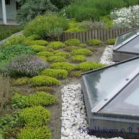 47 Tetőkert, rózsakert, földlefutások lépcsős támfalazása