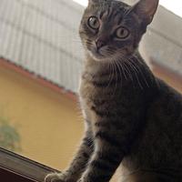 Zoé cica gazdit keres még mindig!