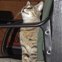 Zoé cica gazdit keres!