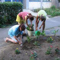 Kertészkedés az Erdész utcában