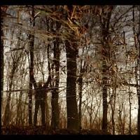 APOPTOSE - Bannwald CD (Tesco Organisation, 2010)